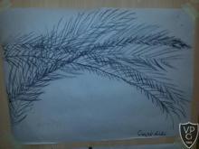 Művészetek óra, végzősökkel - növénytanulmány rajzolása szénnel